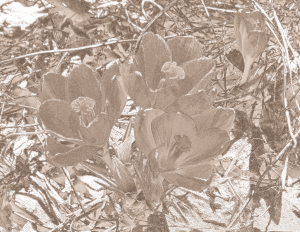 Photo transformed to sepia effect using Inkscape.
